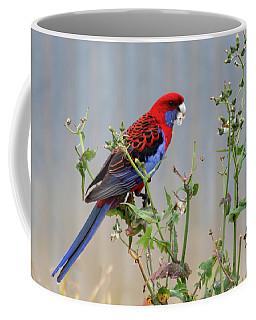 Crimson Rosella Coffee Mug