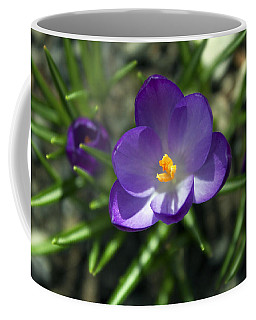 Coffee Mug featuring the photograph Crocus In Bloom #1 by Jeff Severson