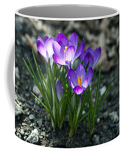 Coffee Mug featuring the photograph Crocus In Bloom #2 by Jeff Severson