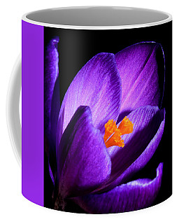 Crocus Coffee Mug by Tammy Schneider