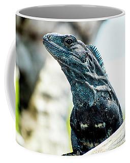 Ctenosaura Coffee Mug