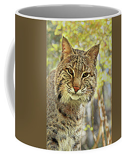 Coffee Mug featuring the photograph Curiosity The Bobcat by Jessica Brawley