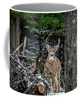 Curious Buck Coffee Mug