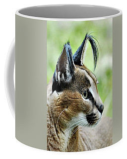 Coffee Mug featuring the photograph Curious Caracal by Howard Bagley