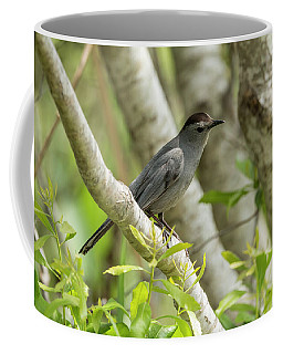 Curious Gray Catbird Coffee Mug