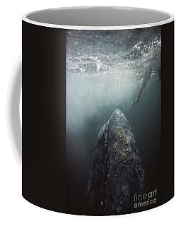Curious Gray Whale And Tourist Coffee Mug