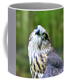 Curious Merlin Coffee Mug