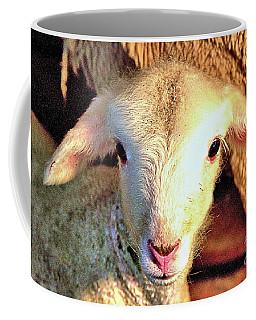 Curious Newborn Lamb Coffee Mug