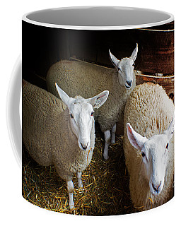 Curious Sheep Coffee Mug by Kevin Fortier