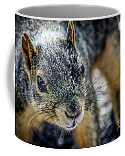 Coffee Mug featuring the photograph Curious Squirrel by Joann Copeland-Paul