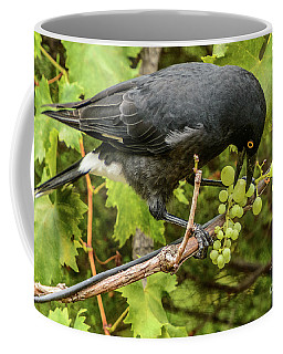 Currawong On A Vine Coffee Mug