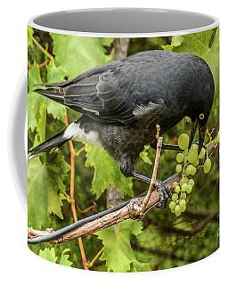 Currawong On A Vine Coffee Mug