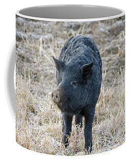 Coffee Mug featuring the photograph Cute Black Pig by James BO Insogna