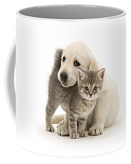 Cute Kitten And Perfect Puppy Coffee Mug