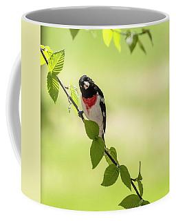 Cute Rose-breasted Grosbeak Coffee Mug