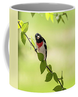 Cute Rose-breasted Grosbeak Coffee Mug