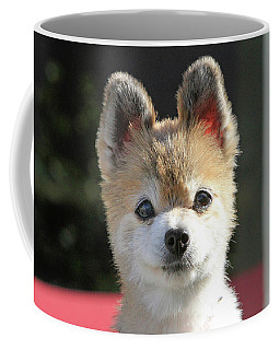 Cute Stare Down Coffee Mug by Shoal Hollingsworth