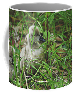 Cygnets IIi Coffee Mug by Cassandra Buckley