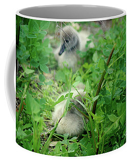 Cygnets V Coffee Mug