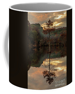 Cypress At Sunset Coffee Mug by Iris Greenwell