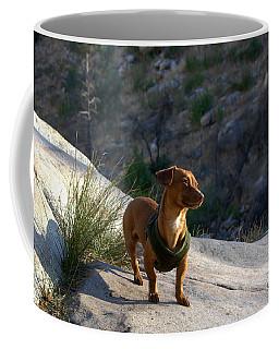 Dachshund's Delight Coffee Mug