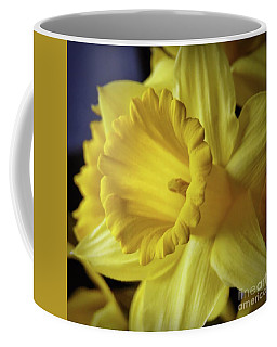 Coffee Mug featuring the photograph Daffodil Closeup - Square by Patricia Strand