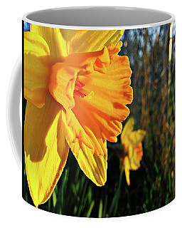 Coffee Mug featuring the photograph Daffodil Evening by Robert Knight