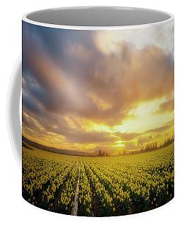 Daffodil Sunset Coffee Mug