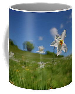 Coffee Mug featuring the photograph Daffodils Blossimg At Cavalla Plains 2017 I - Fioritura Dei Narcisi Al Pian Della Cavalla 2017 by Enrico Pelos