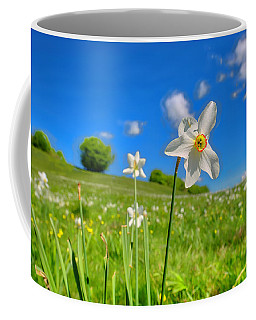Coffee Mug featuring the photograph Daffodils Blossimg At Cavalla Plains 2017 II - Fioritura Dei Narcisi Al Pian Della Cavalla 2017 by Enrico Pelos