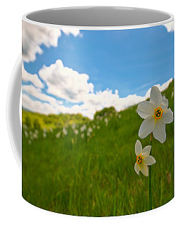 Coffee Mug featuring the photograph Daffodils Blossimg At Cavalla Plains 2017 Iv - Fioritura Dei Narcisi Al Pian Della Cavalla 2017 by Enrico Pelos