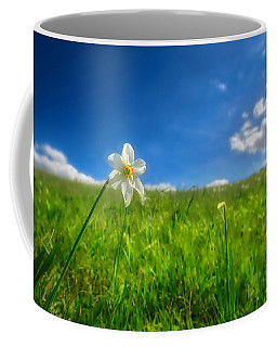 Coffee Mug featuring the photograph Daffodils Blossimg At Cavalla Plains 2017 Vi - Fioritura Dei Narcisi Al Pian Della Cavalla 2017 by Enrico Pelos