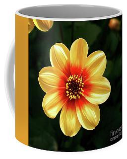 Dahlias Flower - Yellow Tones Coffee Mug