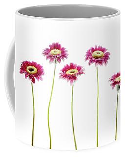 Daisies In A Row Coffee Mug