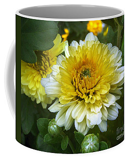 Coffee Mug featuring the photograph Daisies by Jasna Dragun