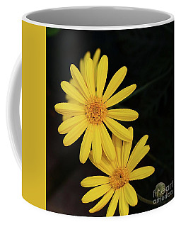 Coffee Mug featuring the photograph Daisy Daisy And A Bud by Cindy Manero