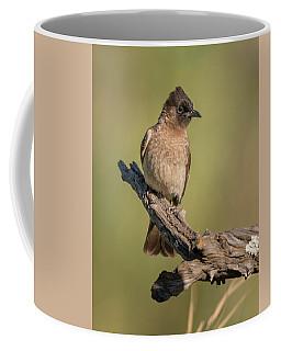 Dark-capped Bulbul Coffee Mug