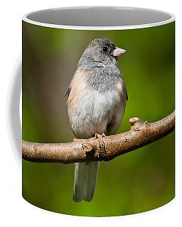 Dark Eyed Junco Perched On A Branch Coffee Mug