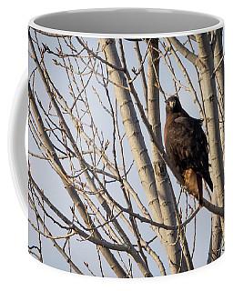Dark-morph Western Red-tailed Hawks Coffee Mug