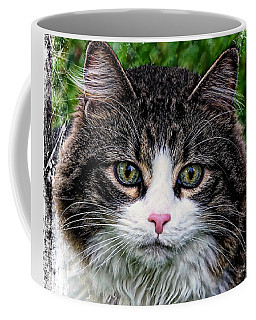 Decorative Maine Coon Cat A4122016 Coffee Mug