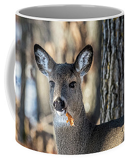Coffee Mug featuring the photograph Deer At The Salad Bar by Paul Freidlund