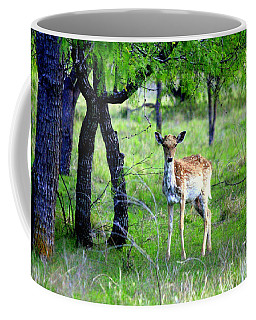 Deer Curiosity Coffee Mug