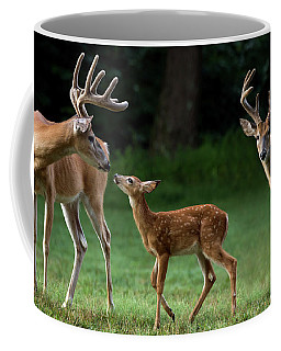 Coffee Mug featuring the photograph Deer Family Portrait by Andrea Silies