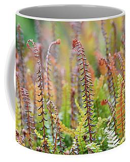 Blechnum Penna-marina Coffee Mug
