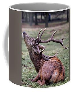 Deer Having A Scratch Coffee Mug
