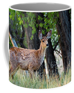 Coffee Mug featuring the photograph Deer In Colorado Forest by John De Bord