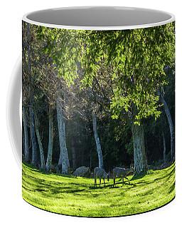 Deer In The Afternoon Sun Coffee Mug