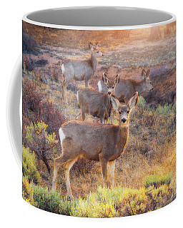 Coffee Mug featuring the photograph Deer In The Sunlight by Darren White