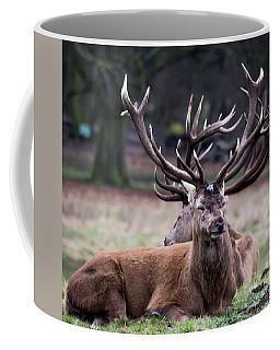 Deer Intertwined Antlers Coffee Mug