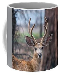 Deer Stare Coffee Mug